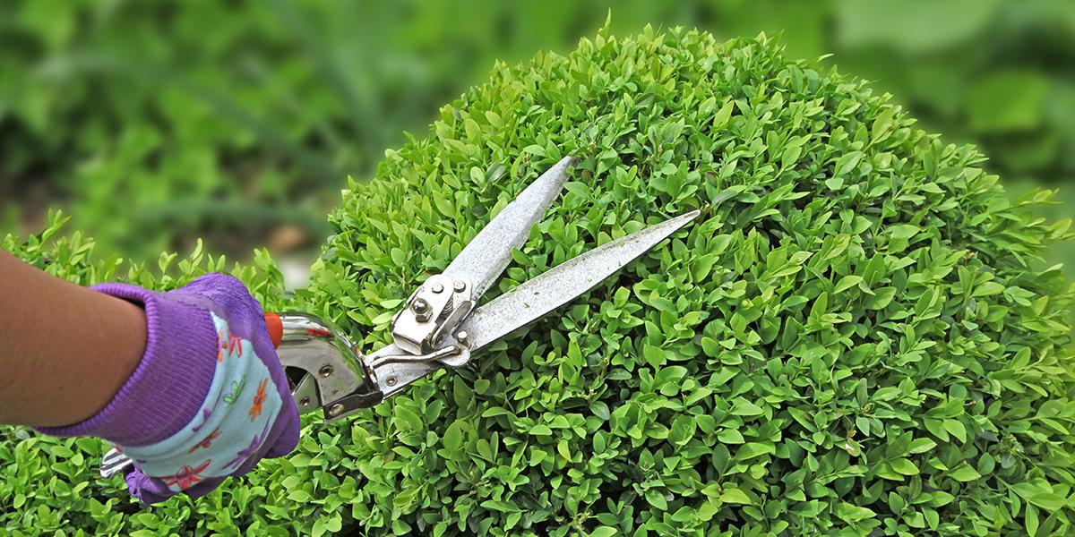 Entretien jardin Luçon